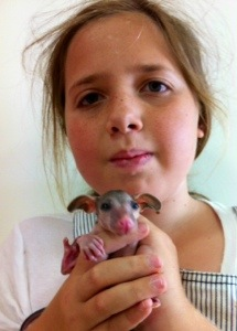 Xanthe and Baby Possum