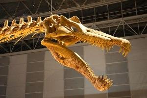Spinosaurus_skull